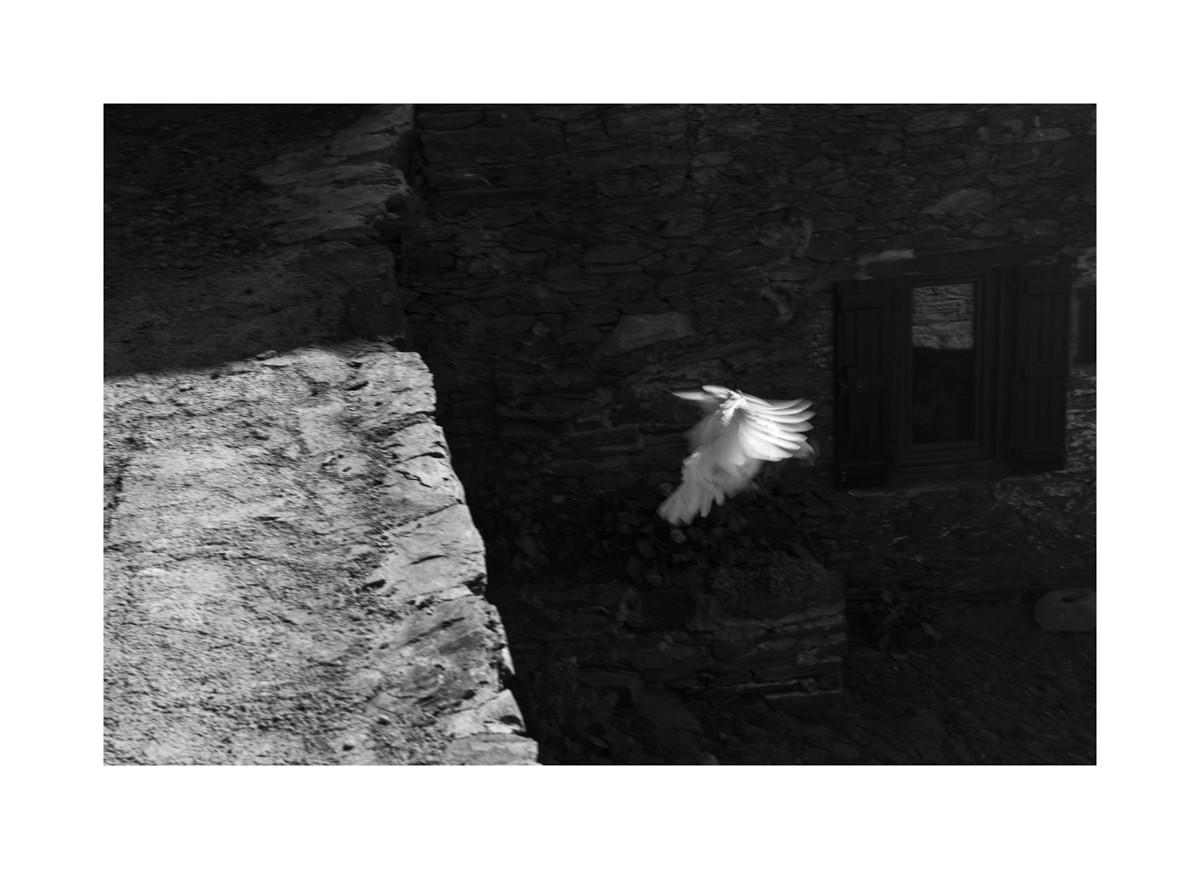 La poule, Val d'Aran 2017