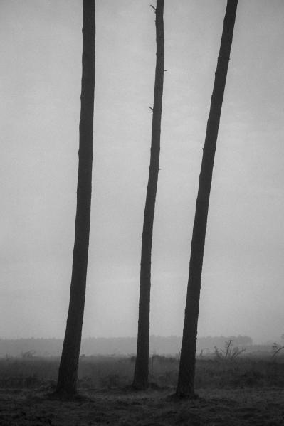 Trois pins